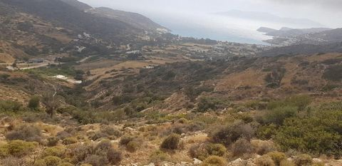 For sale is a plot of land with an area of 11.648 sq.m. on the island of Ios in the village of Mylopotas. The plot is outside the city plan, amphitheatric, has a building permit of 316.49 sq.m., is located 1248 m from the sea with sea and mountain vi...